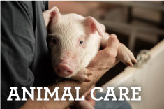 Animal Care and Food Safety