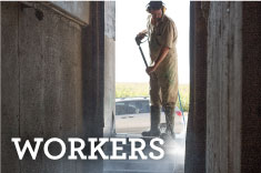 Workers' Well-being