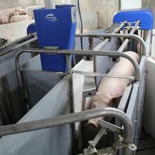 Precision Feeding of Gestating Sows: Use of Electronic Sow Feeders to Reduce Feed Costs and Nutrient Losses into the Environment, While Improving Sow Productivity and Welfare