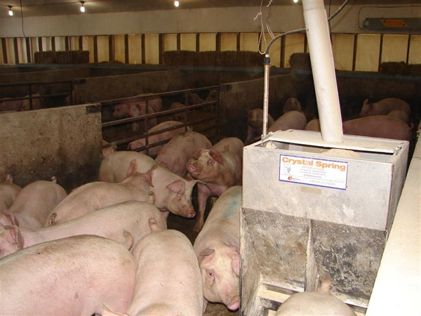Nutritional strategies for improved market hog competitiveness - SIP Initiative