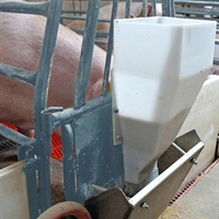 Gestation and lactation feeding strategies for increased performance of sows