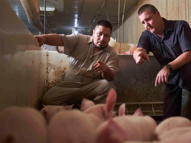 Additional support available for some Ontario hog farmers
