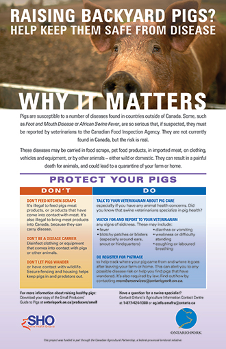 Hobby Pig Producers Ontario - ASF Poster